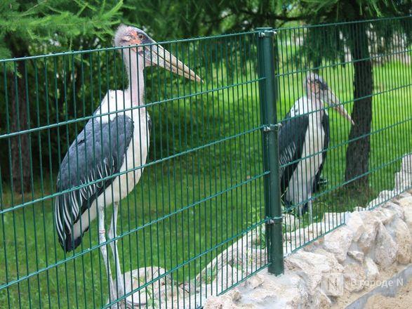 Уникальный вольер для марабу построили в нижегородском зоопарке - фото 11