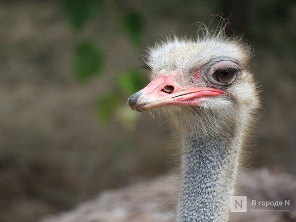 Выжить в пандемию: что происходило в закрытом зоопарке «Лимпопо» - фото 21