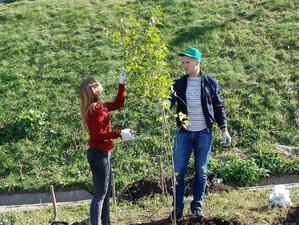150 деревьев и кустарников украсили набережную Федоровского (ФОТО)