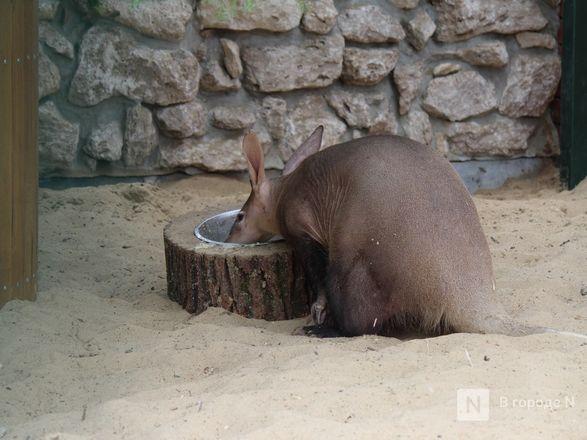 Выжить в пандемию: что происходило в закрытом зоопарке «Лимпопо» - фото 18