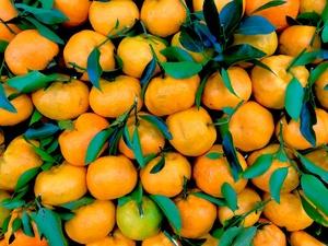 Как выбрать самые вкусные мандарины: рекомендации от Росконтроля