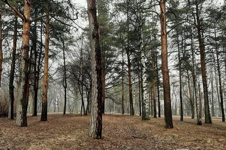 Нижегородский парк «Швейцария» откроется через три месяца