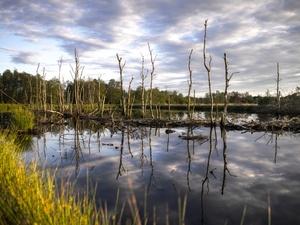 Пьяный водитель «Волги» улетел в болото с дороги под Лукояновом