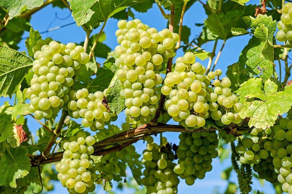 Восемь правил, которые помогут выбрать идеальное белое вино - фото 2
