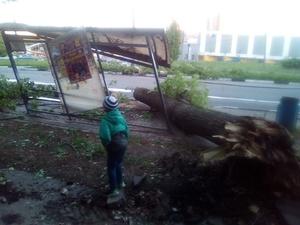 В Нижегородской области от урагана пострадали 29 человек