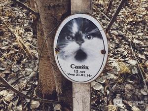 Православный крест над котом: где находится нижегородское кладбище домашних животных