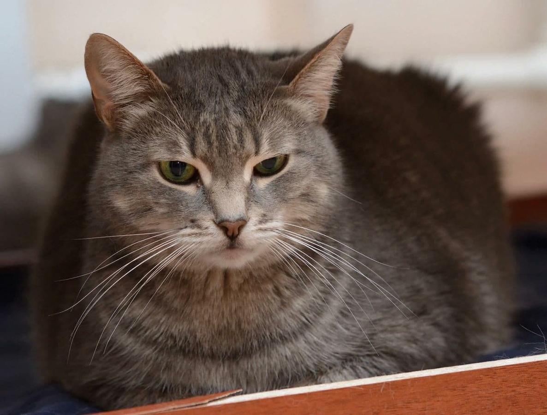 Уже 30 кошек заболевшей раком нижегородки нашли новый дом - фото 1