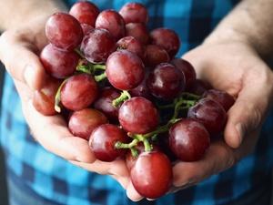 Росконтроль назвал марки ненатурального виноградного сока